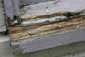 nails used to reinforce a patch in a rotted wood windowsill